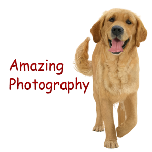 !Amazing-photography!-.png