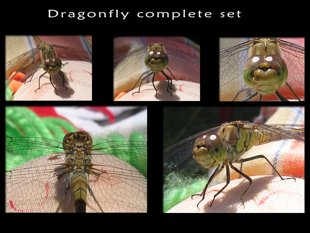 Dragonfly complete set