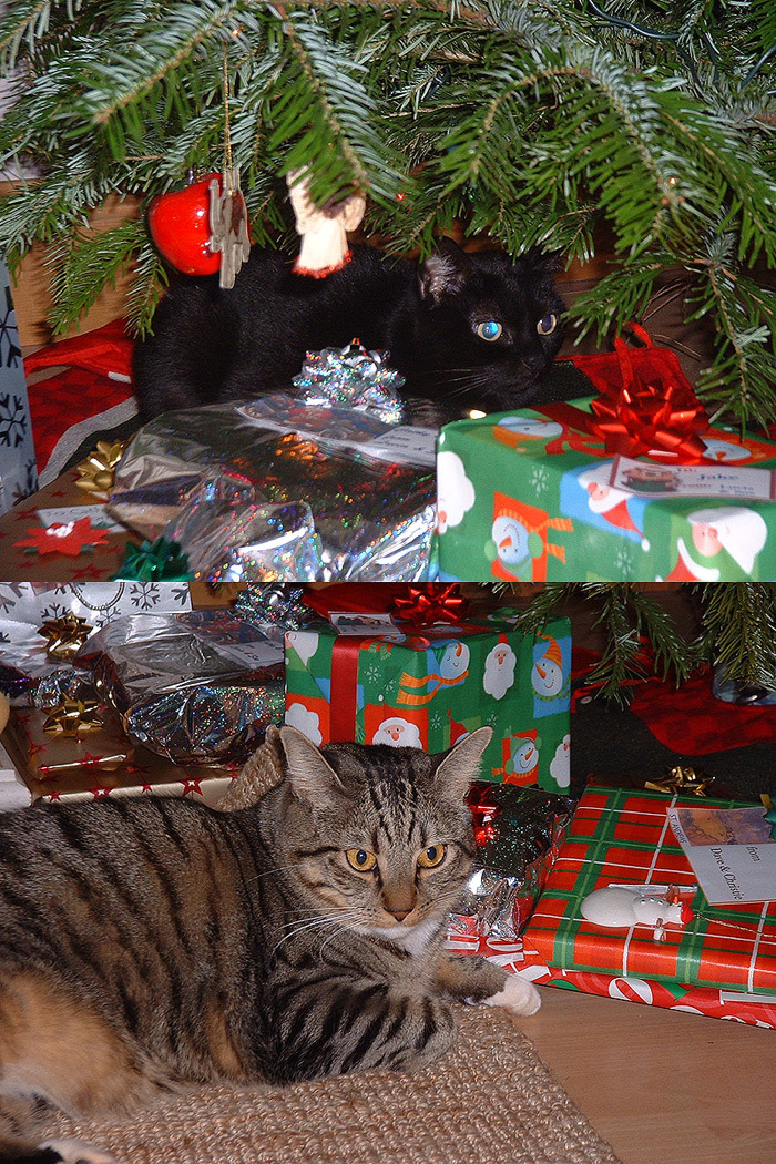 Christmas Cats by Djeser