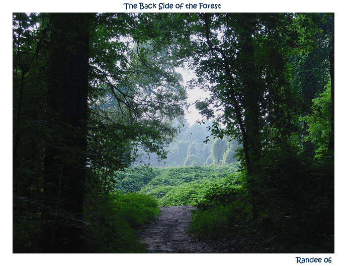 The Back Side of The Forest