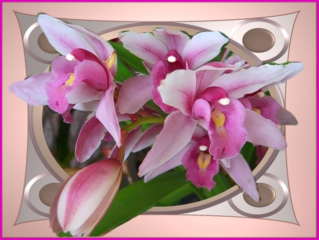 Lovely Pink Orchids By Sieehan Photography Flowersplants