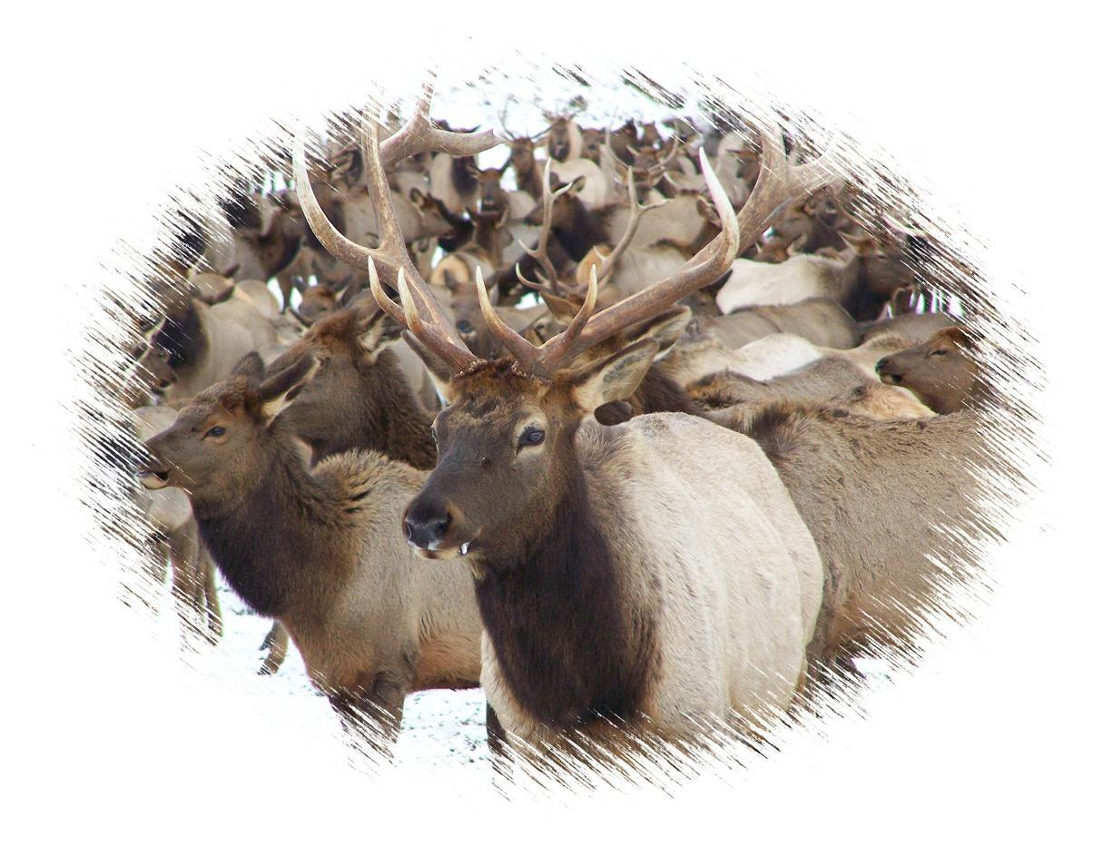 Great Elk