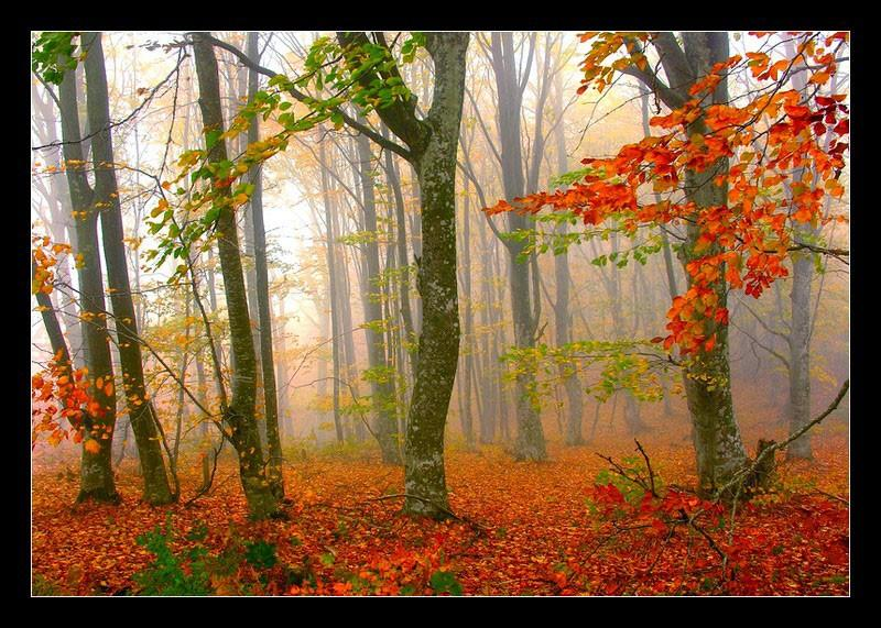 Forest of Fall