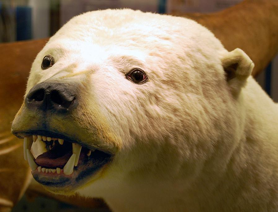I fought this Polar Bear with my bare hands...