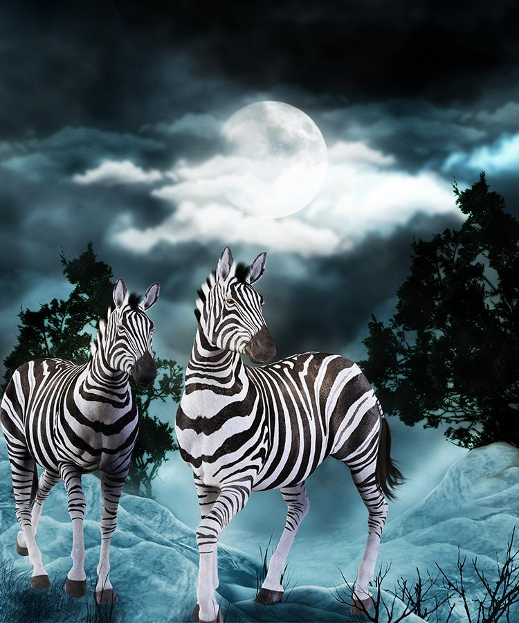Zebras under Moonlight