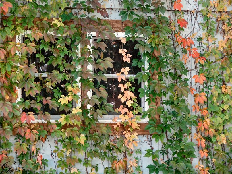 AUTUMN WINDOWS