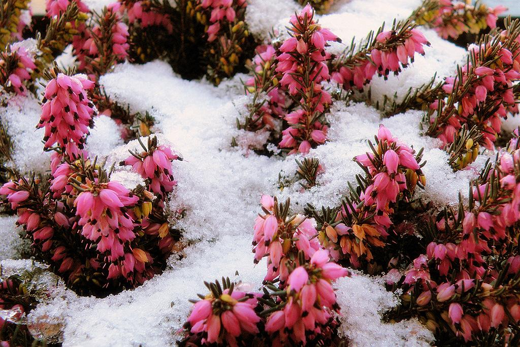 Colors and contrast between the snow