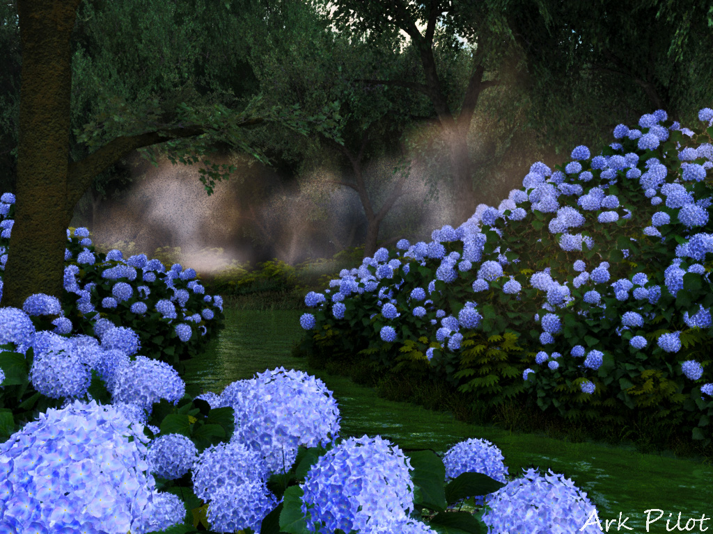 The waterside of the forest where hydrangeas bloom