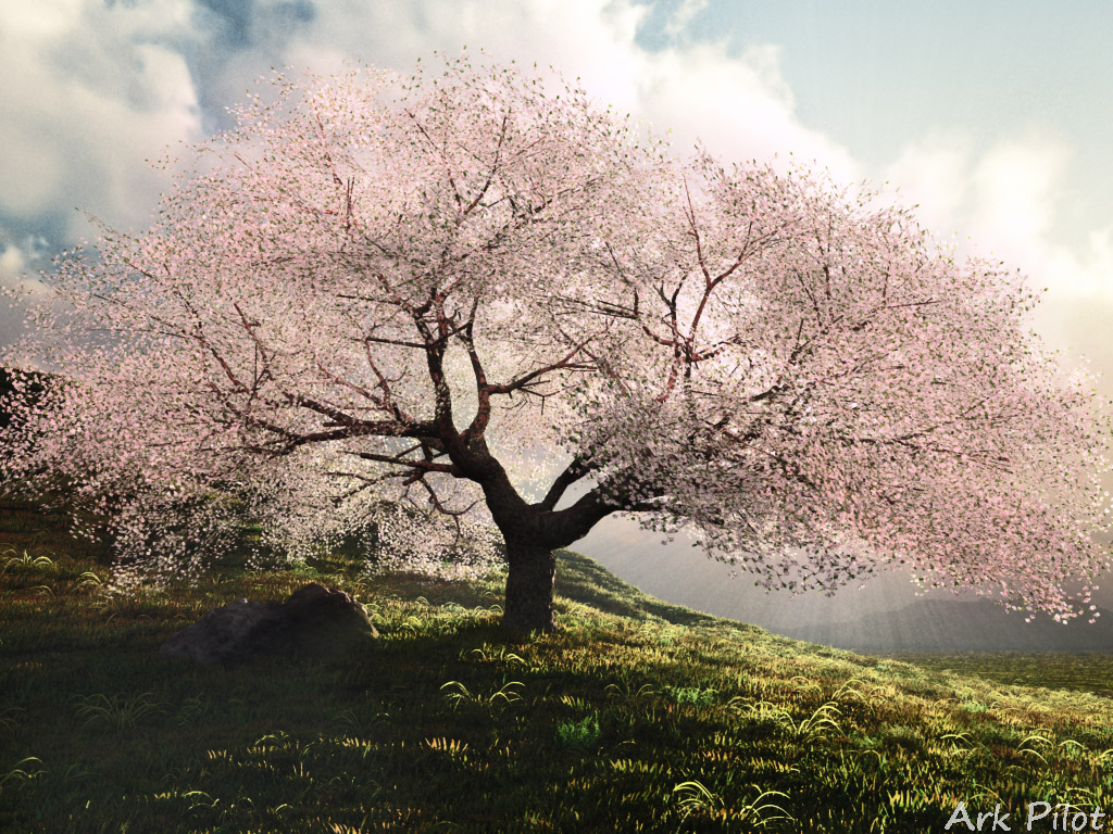 The old cherry tree which shines by backlight