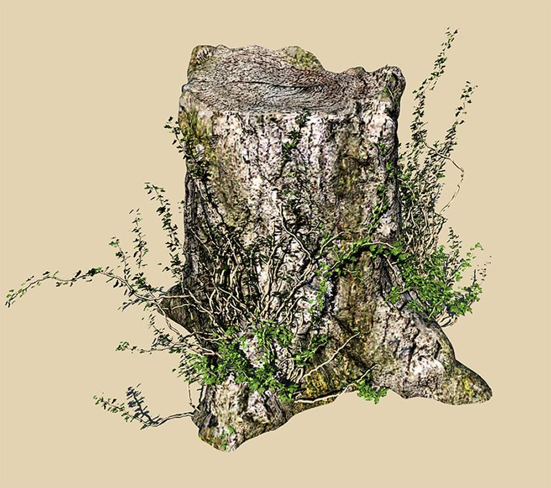 OLD STUMP WITH VINES