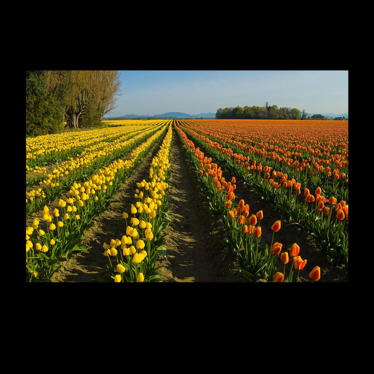 mixed color fields
