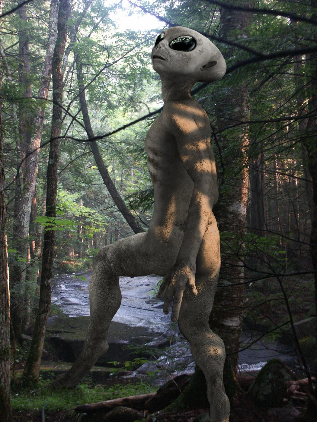 Grey goes for a hike