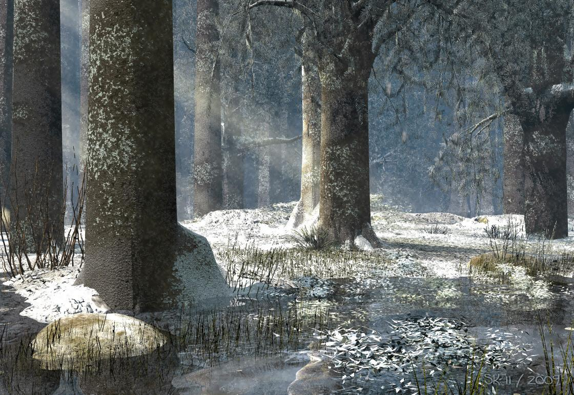 Winter Forest - First Snow