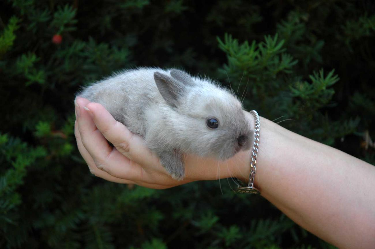 Little Thumper