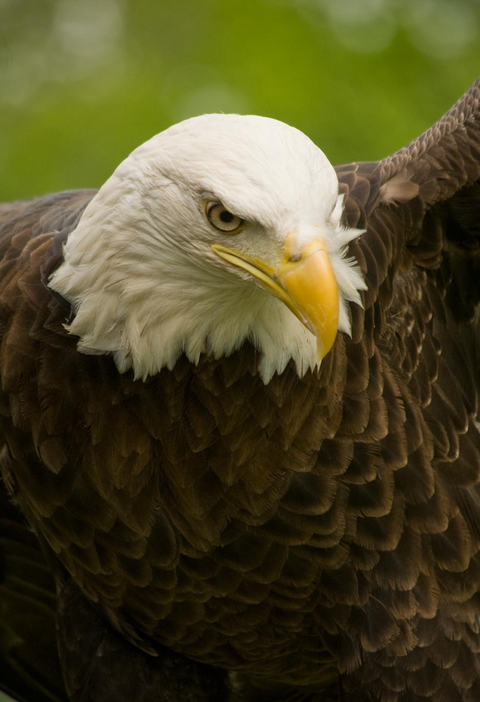 Just Another Eagle Picture . . .