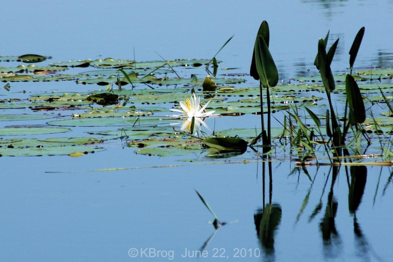 Lily of the lake by kbrog