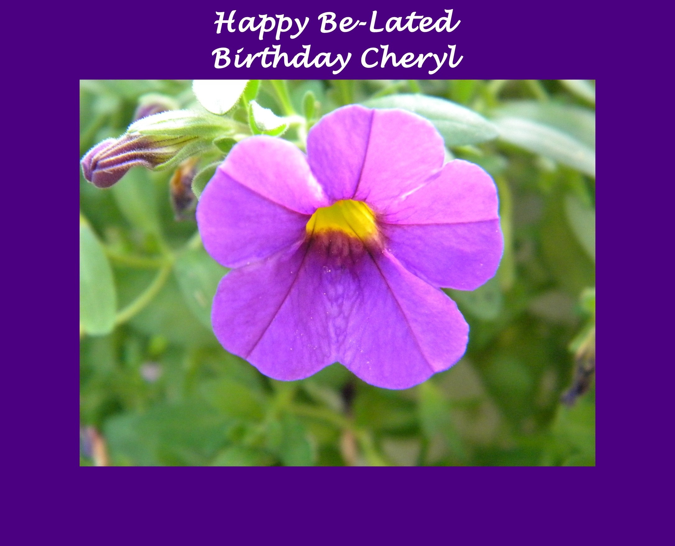 Happy Be,Lated Birthday by elfin14doaks Photography Flowers