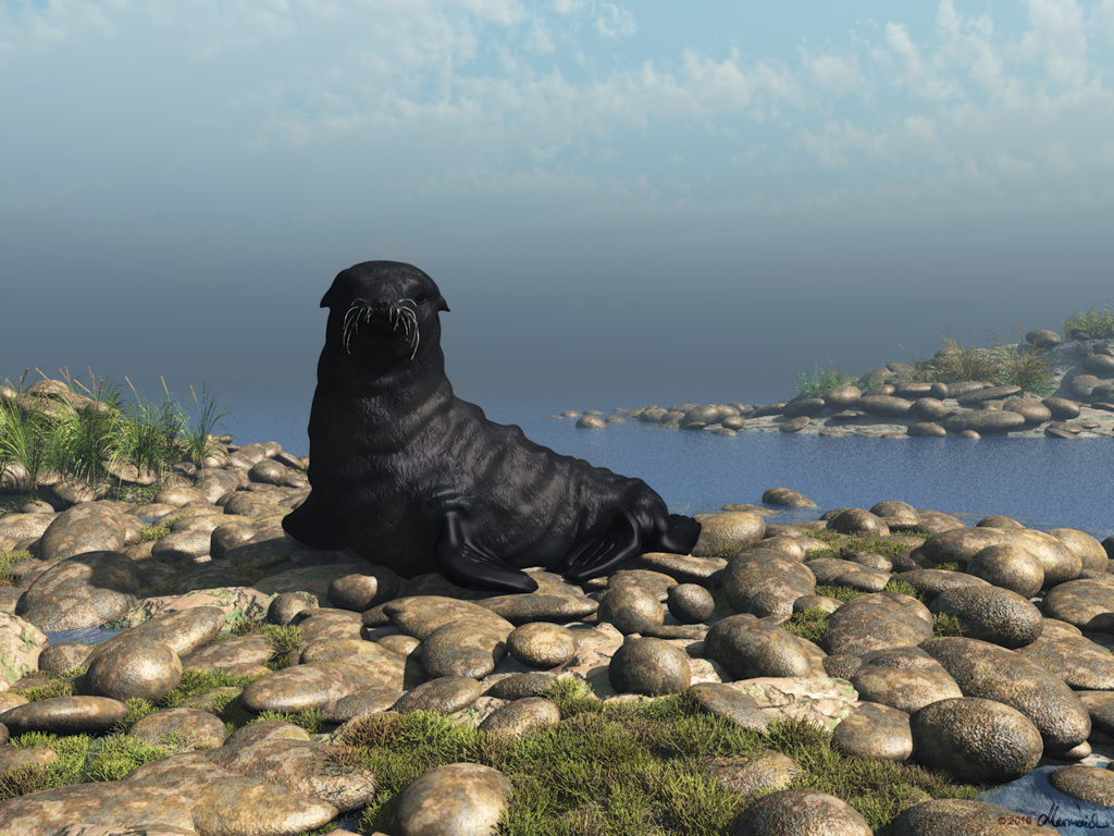 The little black seal