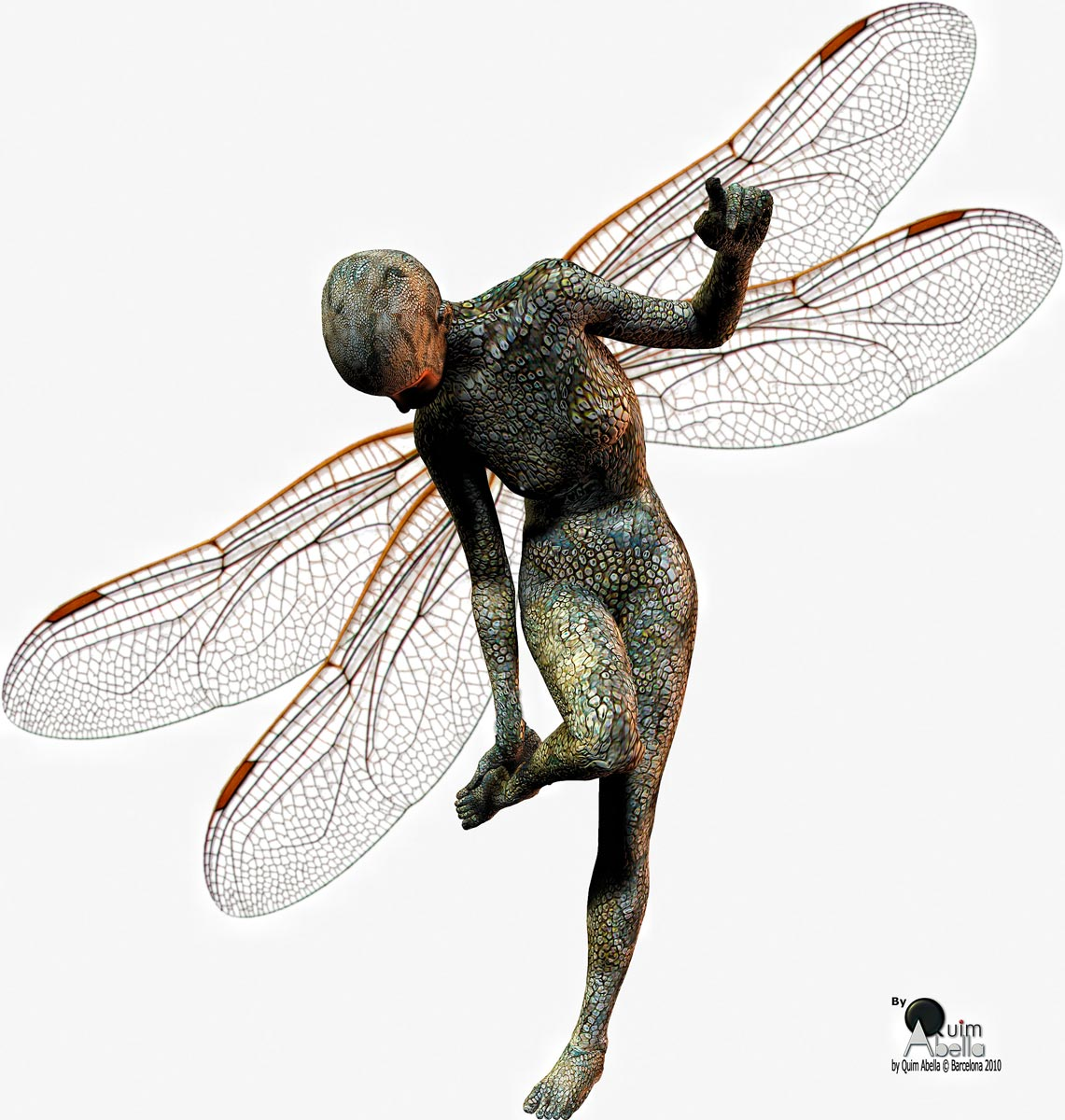 Wings of dragonfly