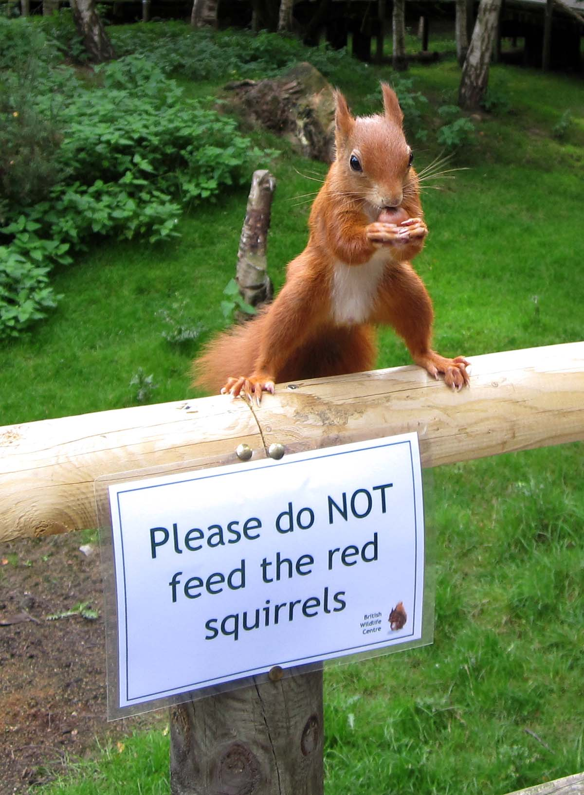 I think squirrels can't read...