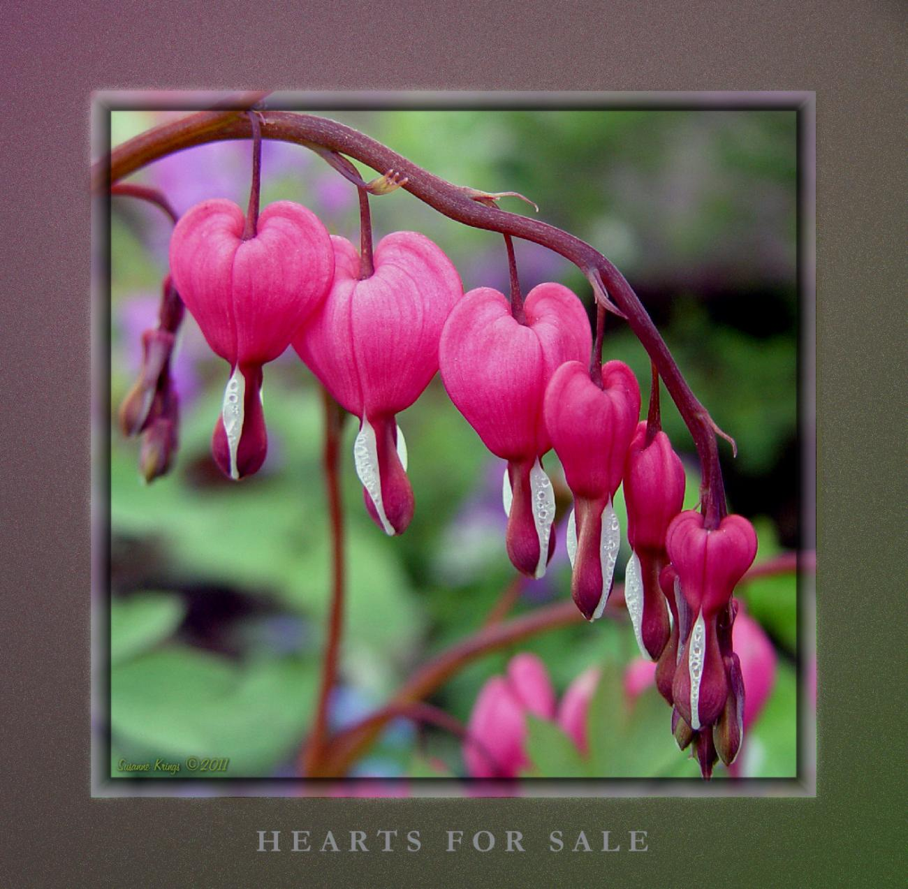 Winter Clearing - Hearts For Sale