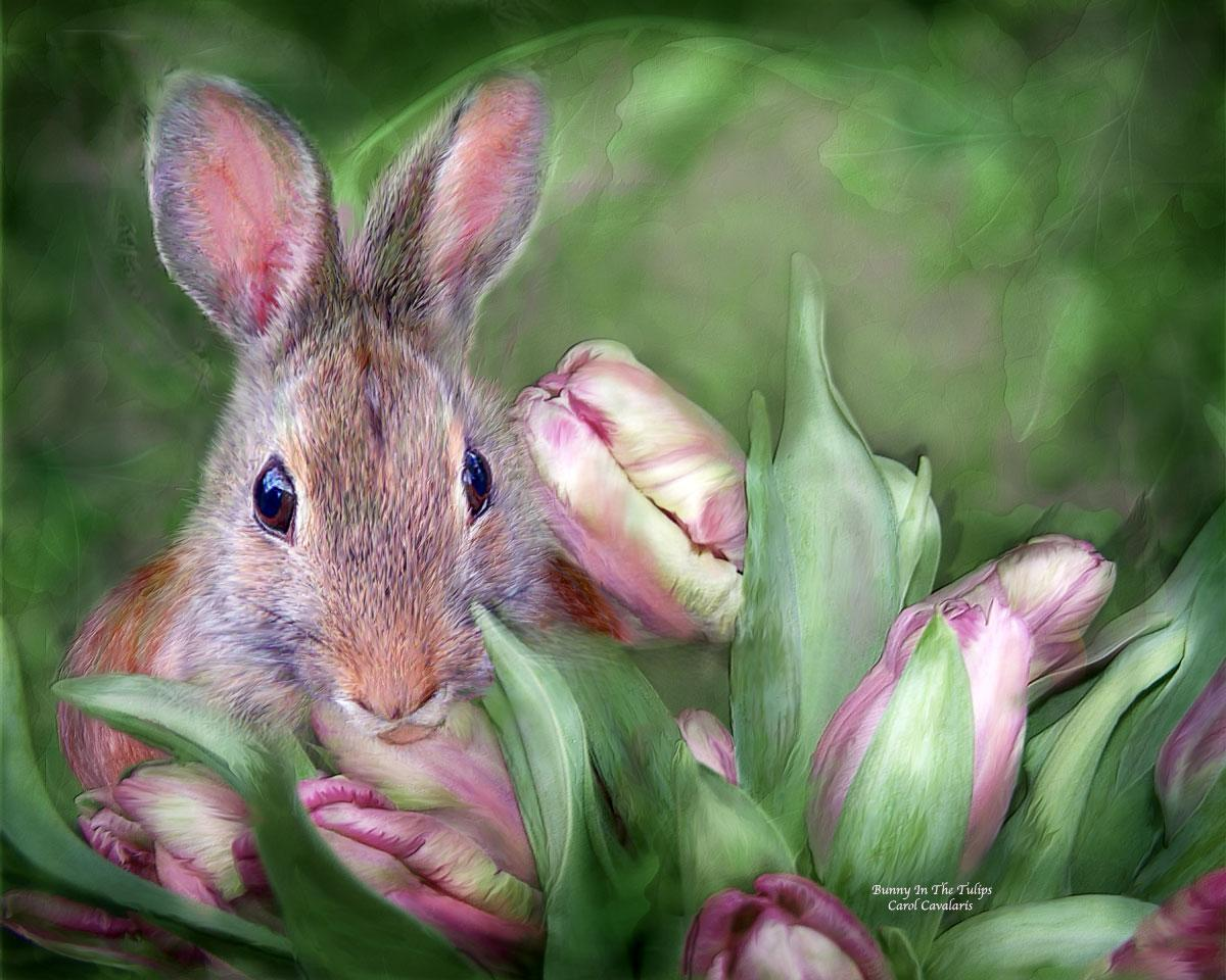Bunny In The Tulips