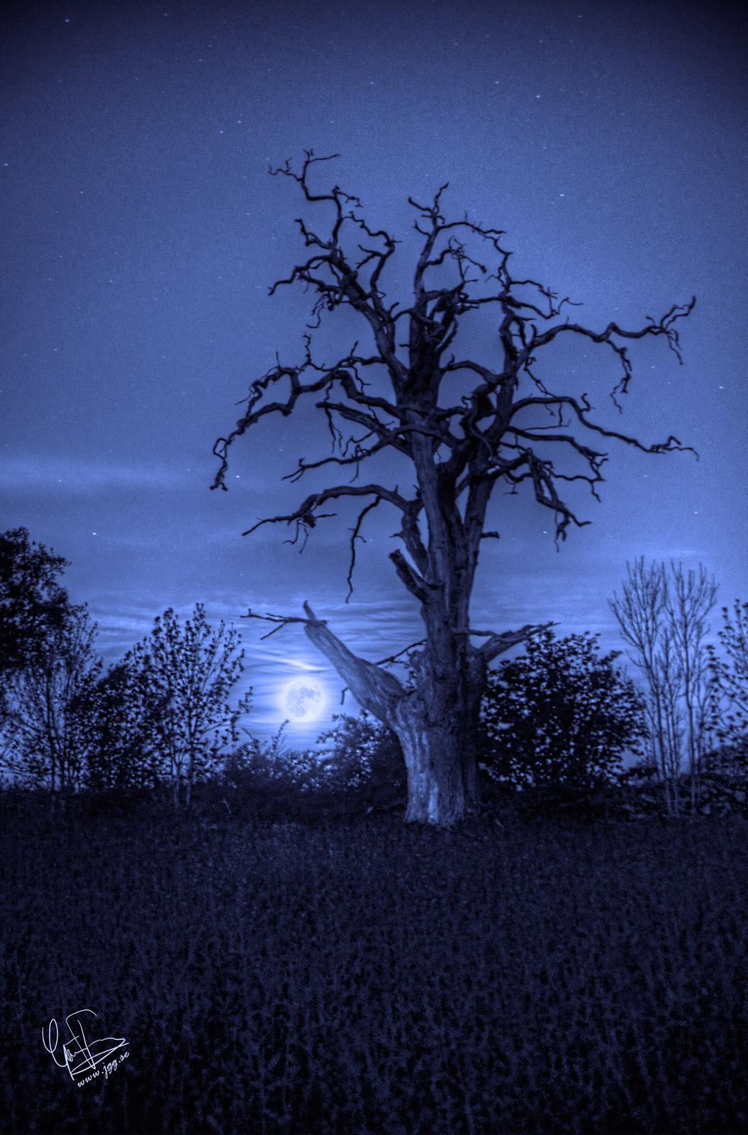 In the blue moonlight by Junglegeorge
