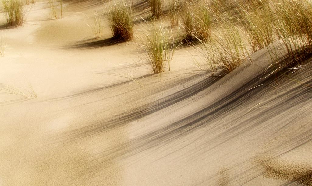 Oregon Dunes:  Long Shadows