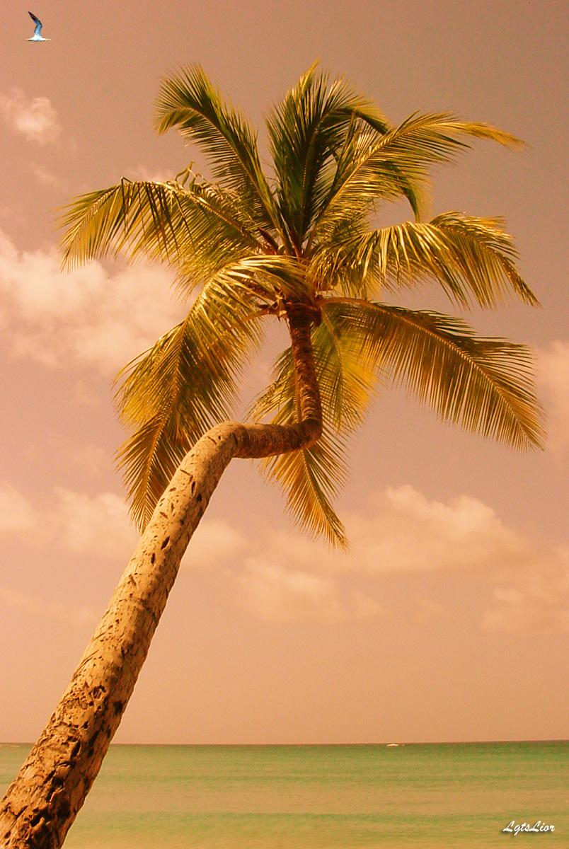 A Lonely Palm Tree (for dphoadley)