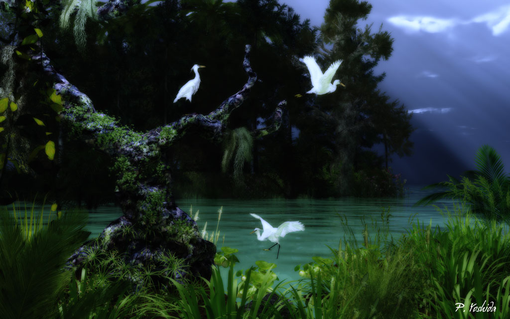 Little Egrets in Cove