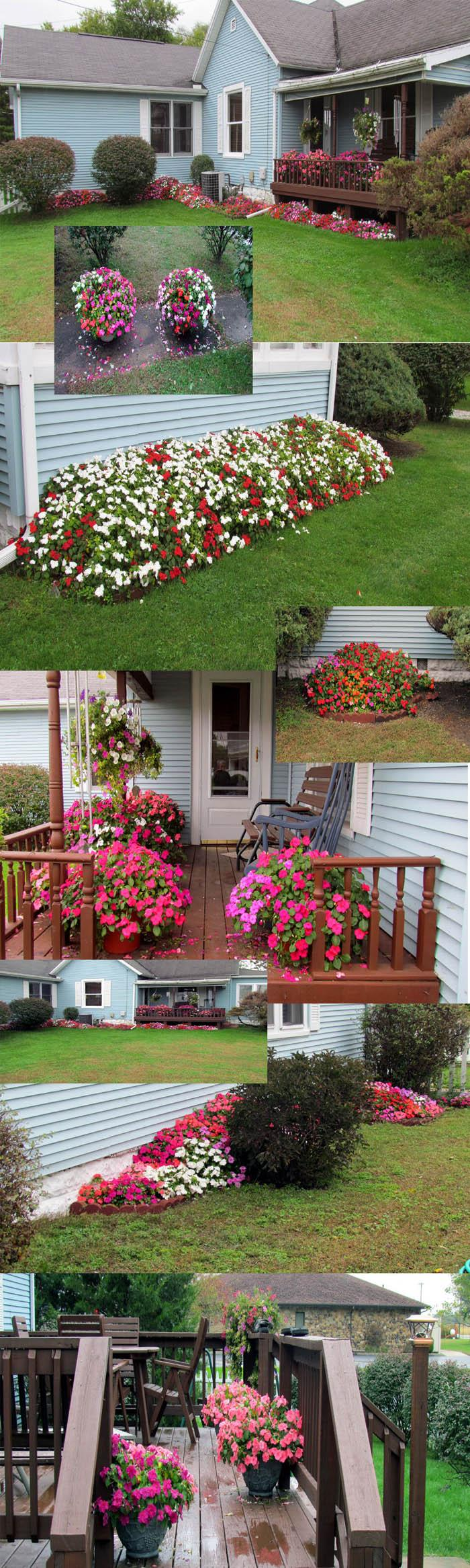 Impatiens did well this year