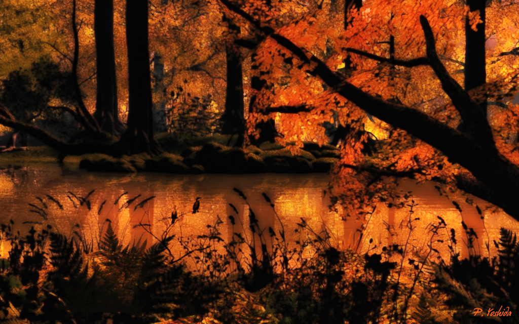 Sunset in an Autum Forest for Monica (Mgtcs)
