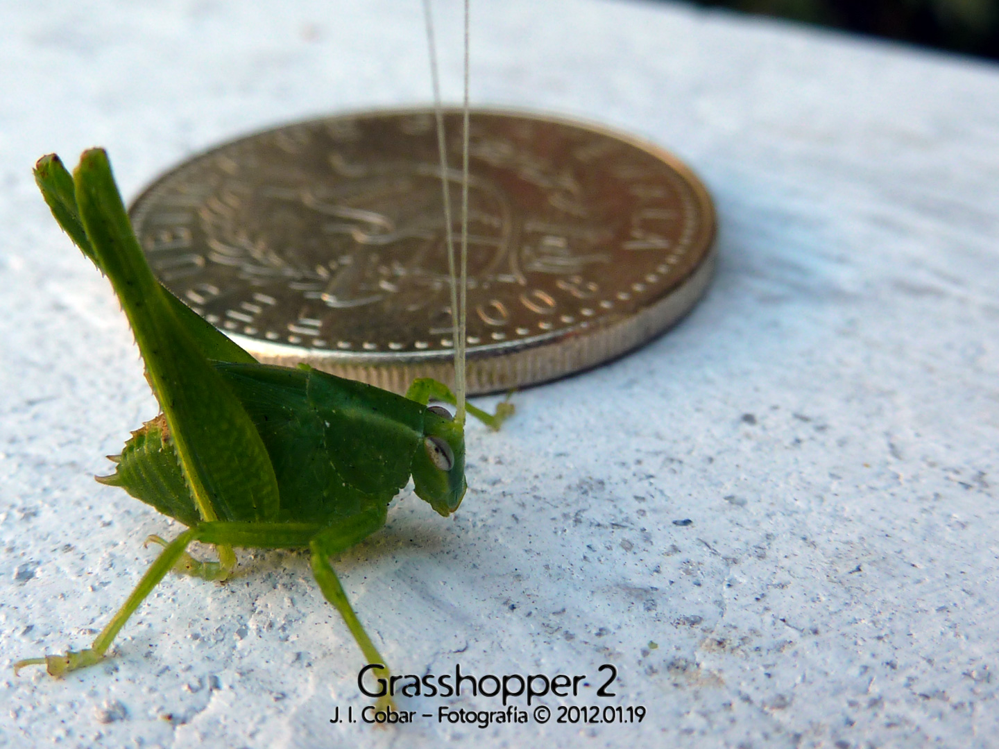 Grasshopper and coin