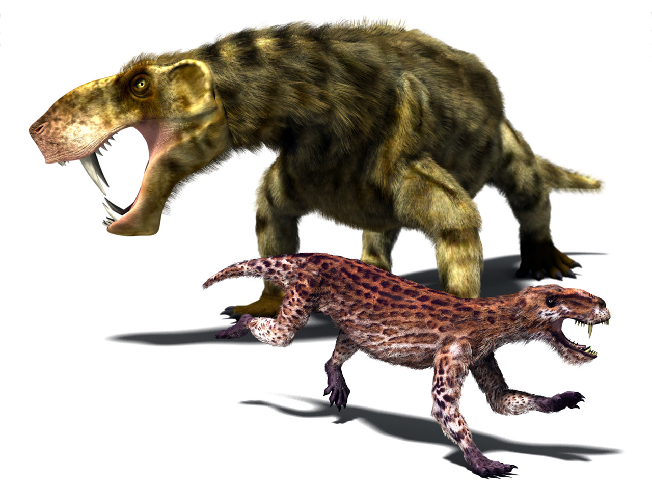 Saber toothed animals