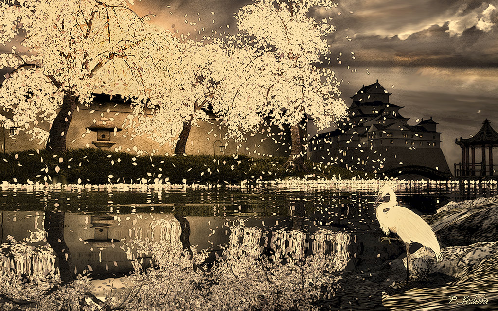 Egret Viewing Cherry Blossoms
