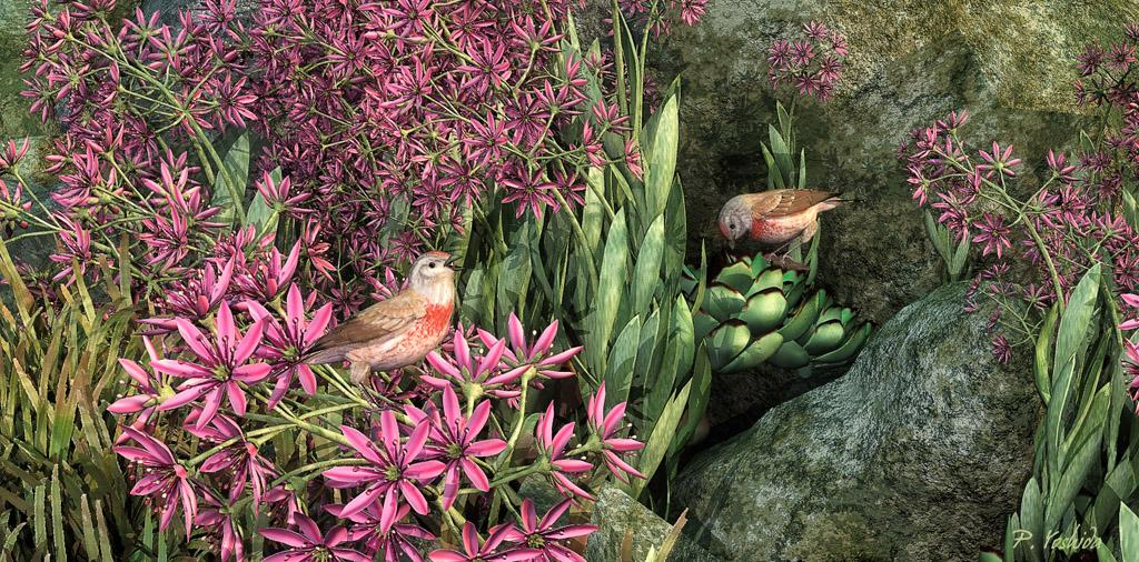 Sempervivums with Linnets