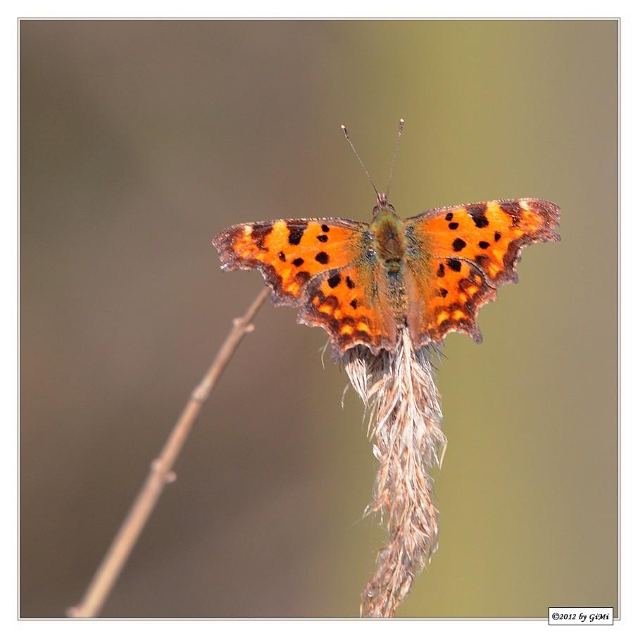 Comma * Robert-le-Diable