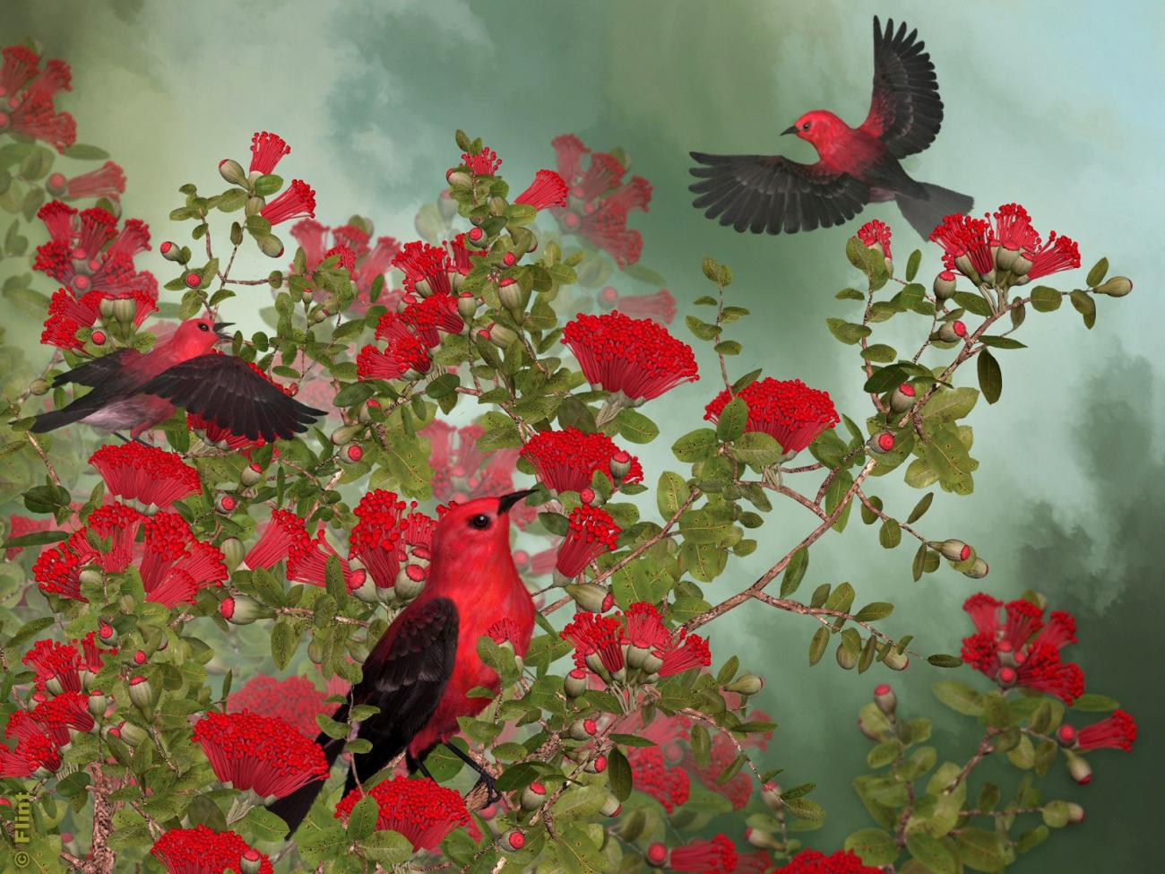 Perched In Scarlet Blossoms