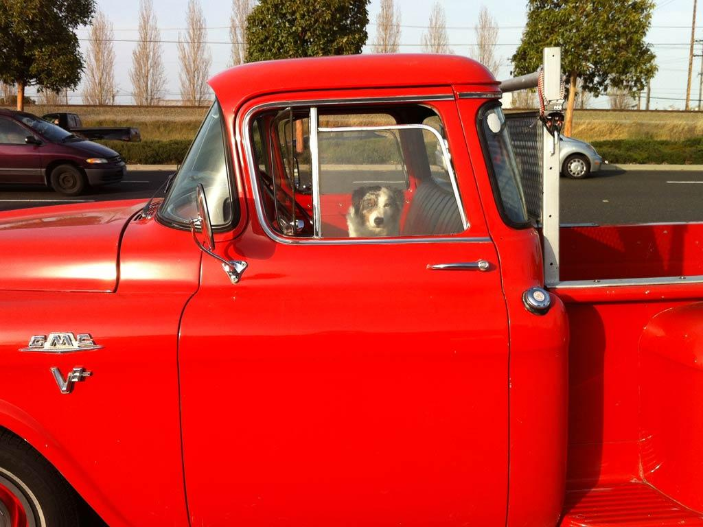 dog in red truck