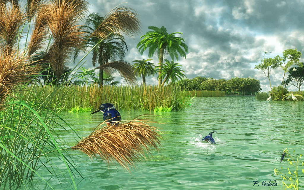 Fishing in the Everglades