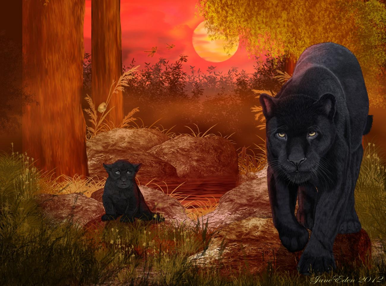 Black Jaguar - Rare Sighting