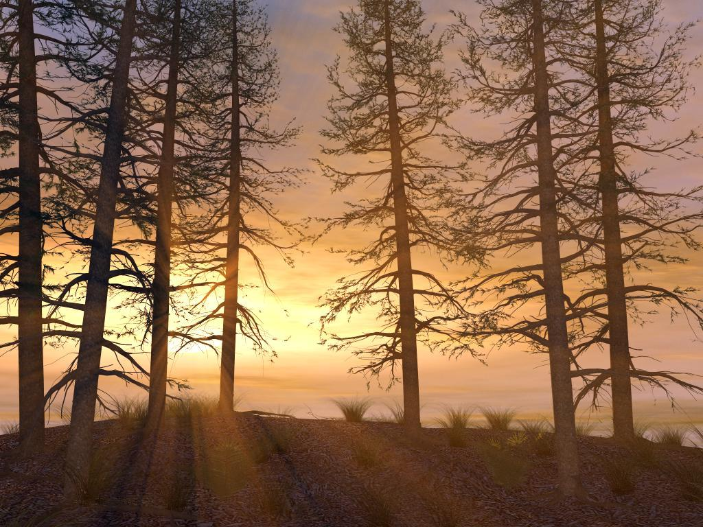 Forest Sunset by Alfons
