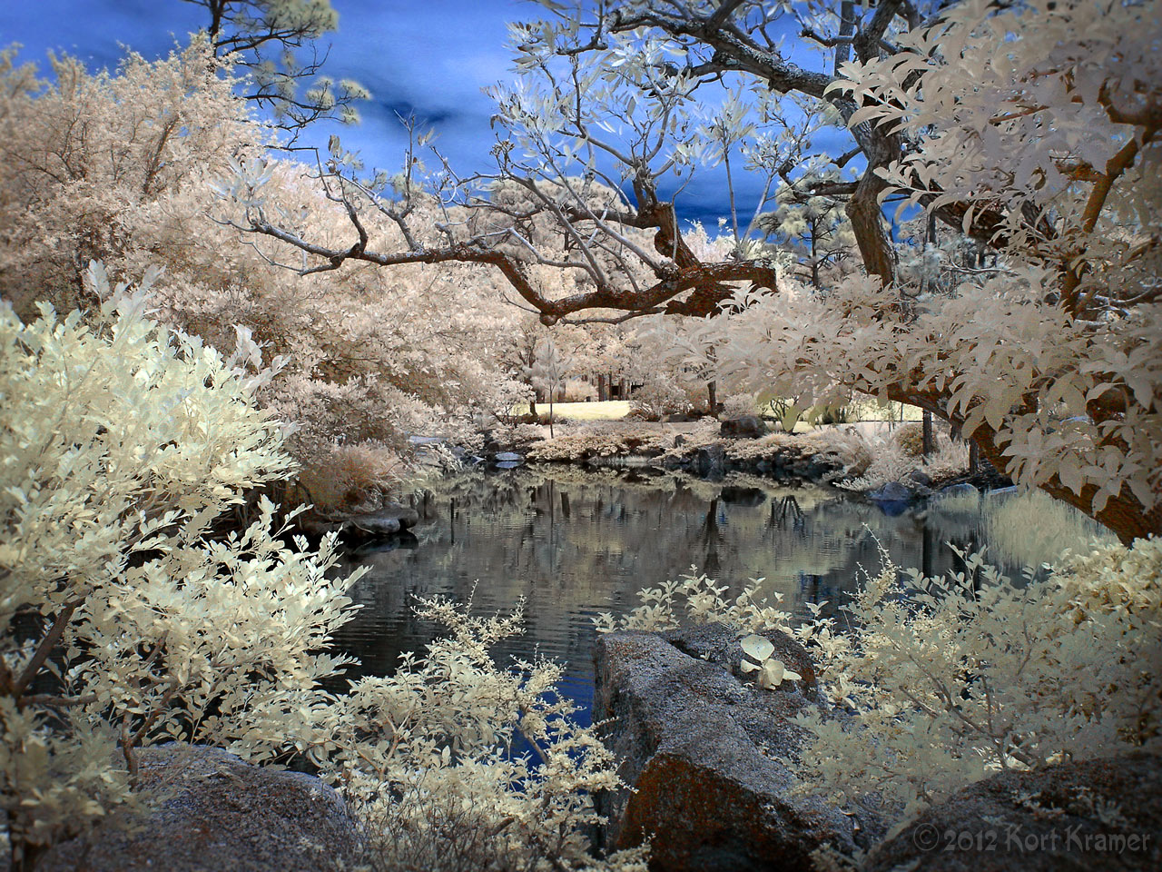 Candyland - Window on the Water - IR