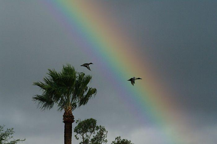 Rainbow with Two Ducks