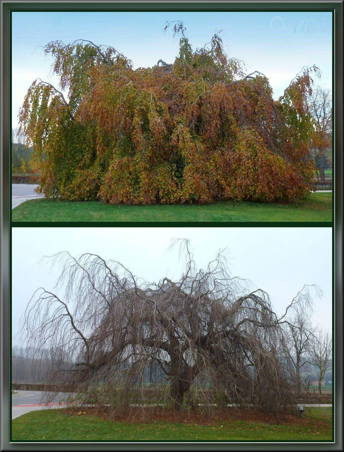 Same tree, Same location, Twice