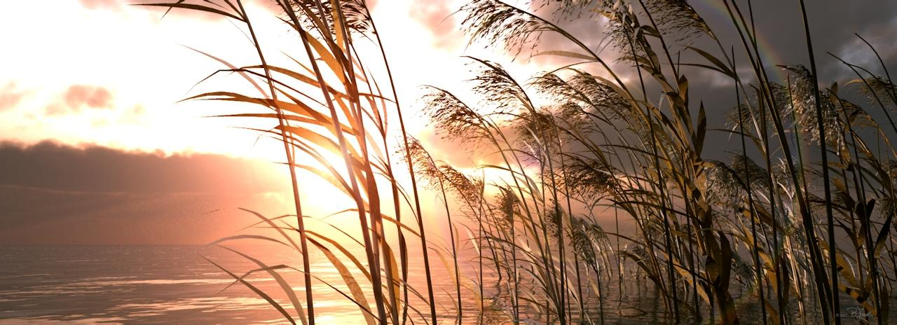 Winters sun on the reed