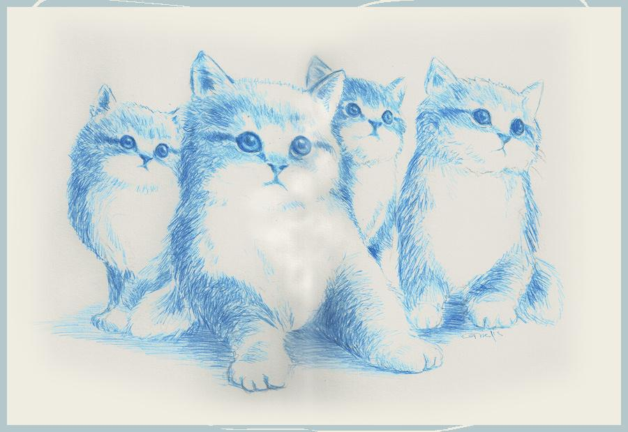 blue kitties