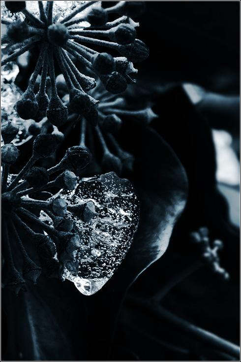 The Thawing Heart