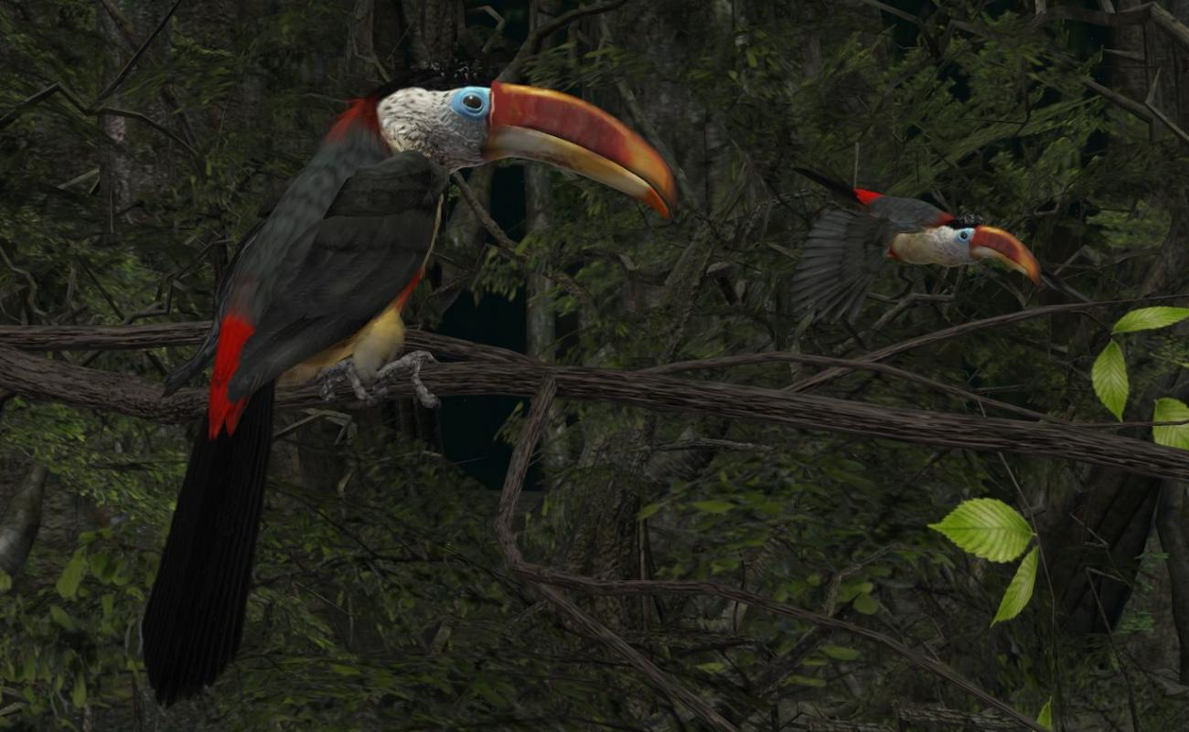 The Curl-crested Aracari