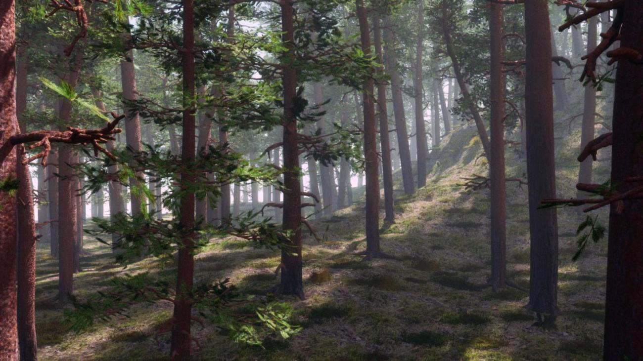 Forest Morn